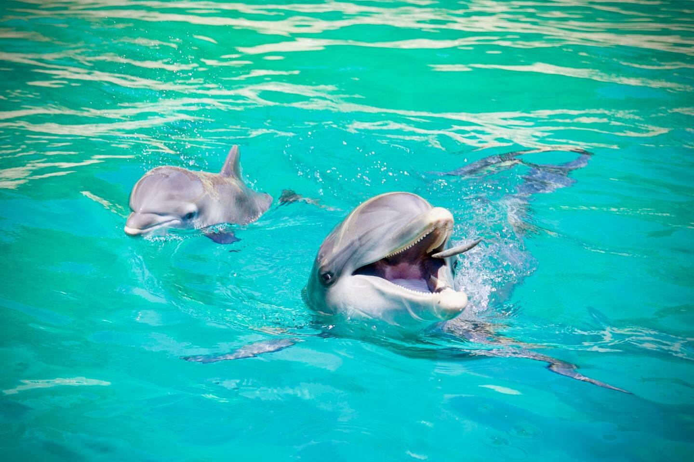 En France, trois structures détiennent des cétacés en captivité: le parc zoologique Planète sauvage, qui possède neuf grands dauphins, le Marineland d'Antibes et le parc Astérix. Ce mardi, se tiendra l'examen en première lecture de la proposition de loi de lutte contre la maltraitance animale.