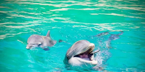 Des dauphins à Marineland