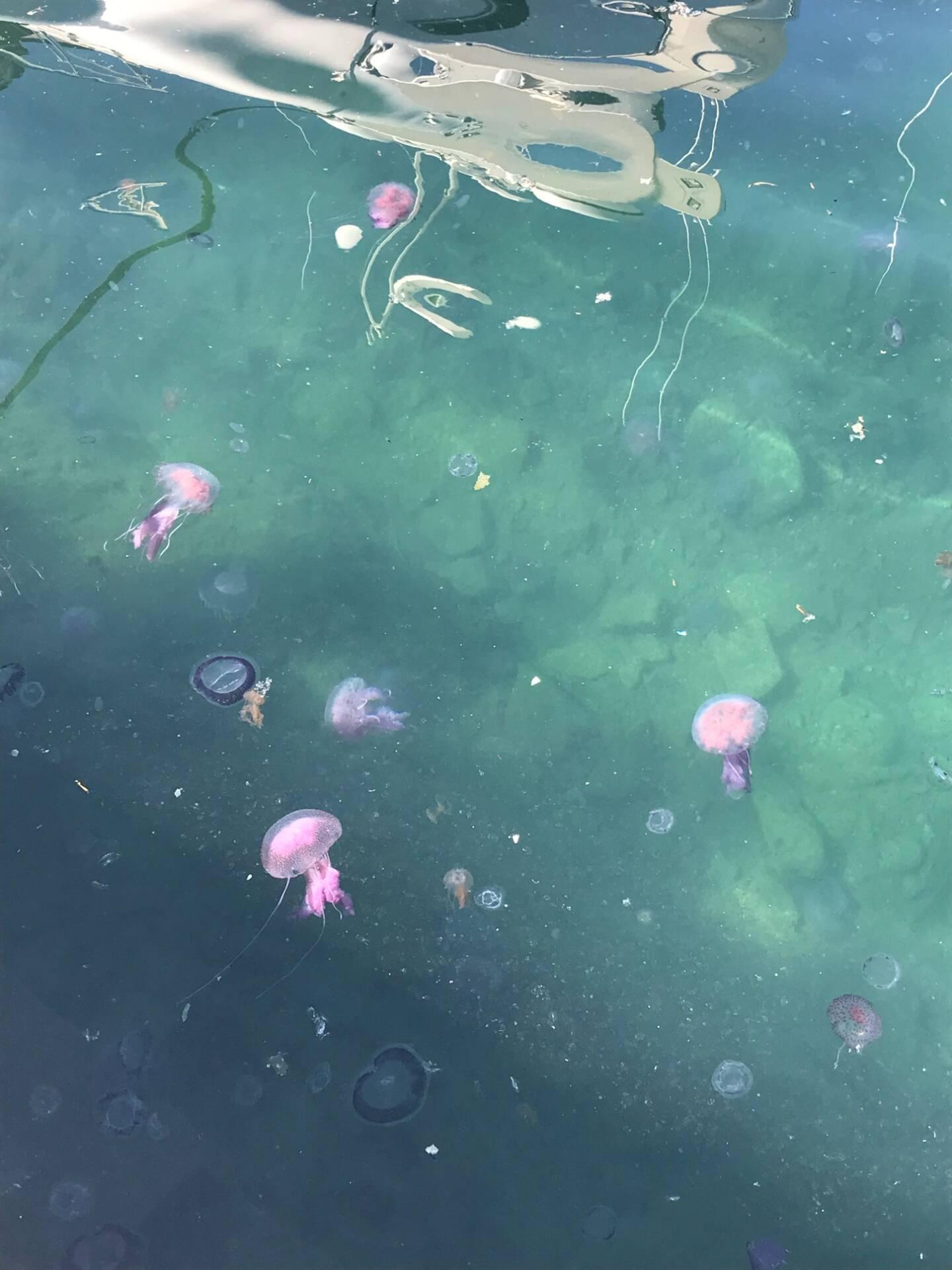 Des dizaines de méduses ont été observées ce mardi matin dans le port de Saint-Tropez.