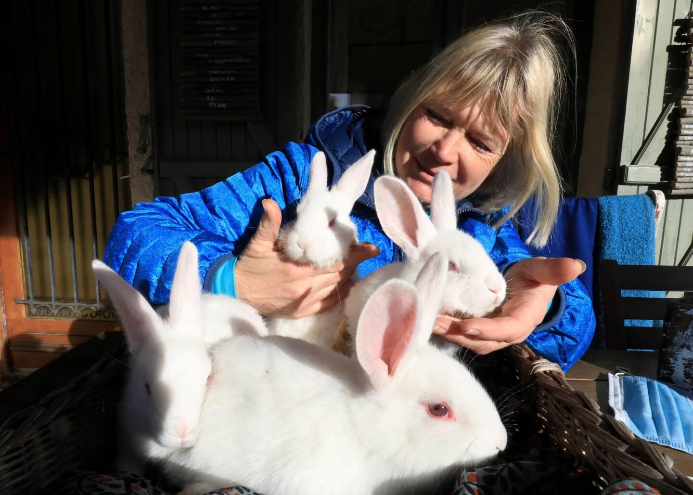 Les associations de défense animale constatent l'afflux massif de lapins abandonnés.