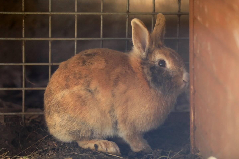 """""""Les lapins ne sont pas faits pour vivre en cage mais dans des jardins, des enclos."""""""
