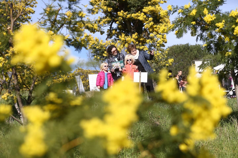 Les familles sont attendues aujourd'hui sur les 2,7 km du parcours santé, au cœur de la forêt de mimosas.