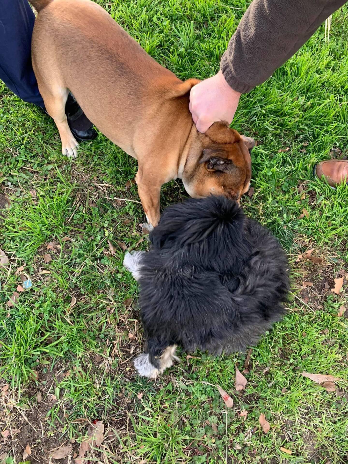 Le chien d'Emmanuelle Guillaume (en noir) a été attaqué à Vallauris.