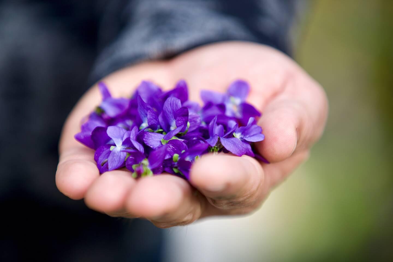 Pas de fête des violettes cette année mais une distribution de bouquets est prévue.