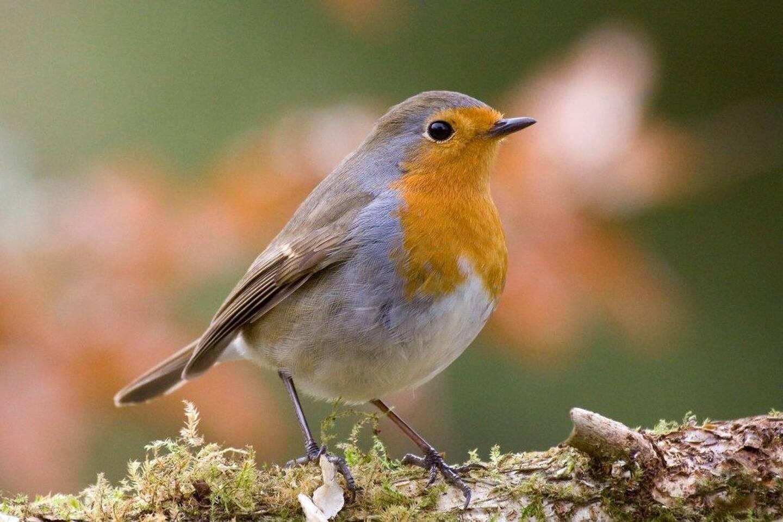 """Le braconnier âgé de 76 ans a été condamné à un an de prison pour avoir """"chassé"""" des oiseaux protégés."""