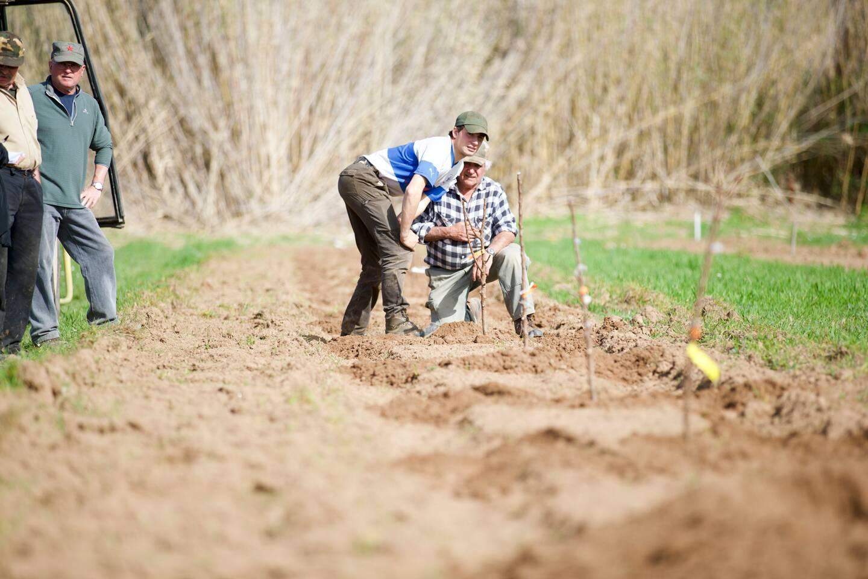 Thomas Coulet et son grand-père vérifient l'alignement des plants