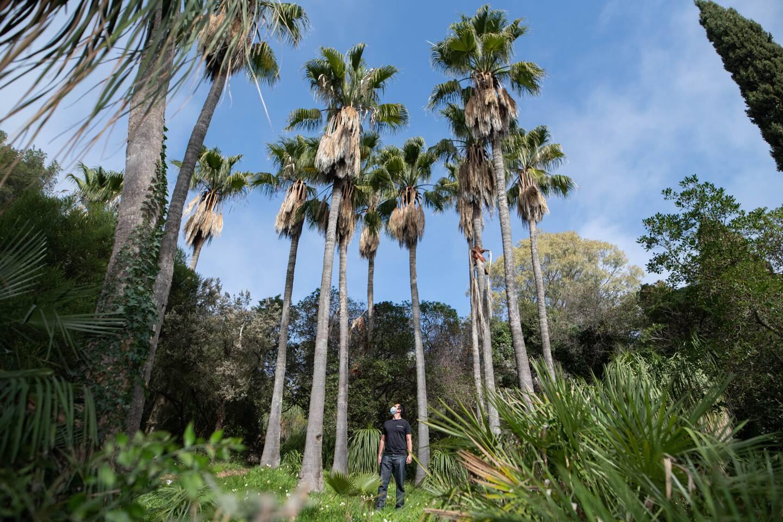Le domaine du Rayol - Jardin des mediterranees rouvre ses portes_ Rayol Canadel