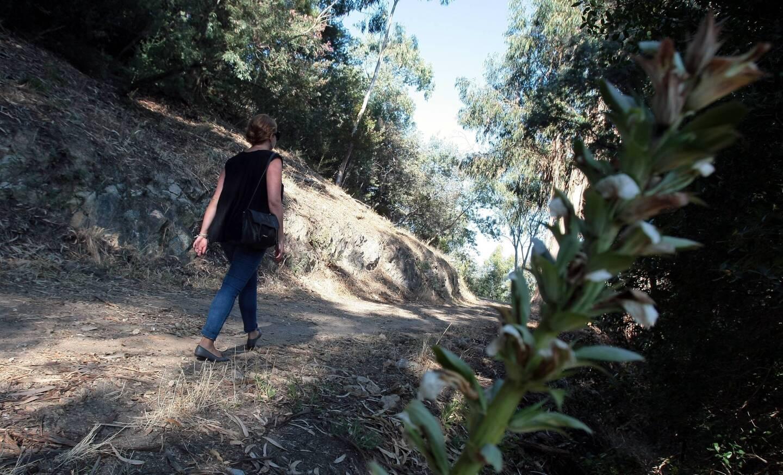 Dans le massif du Paradou, entre mimosas, eucalyptus, chênes..