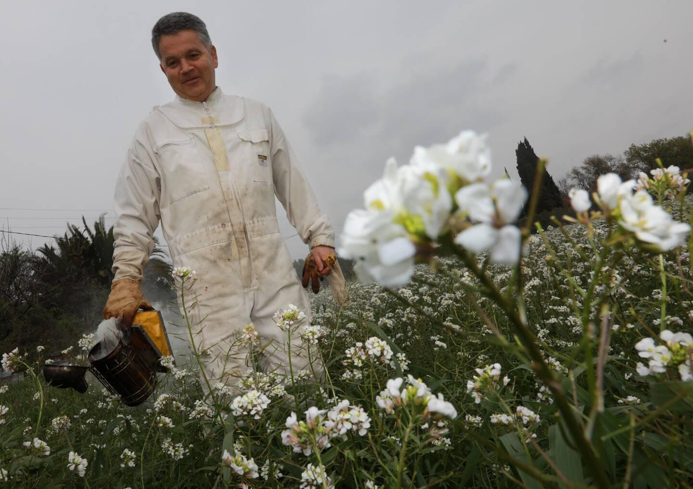 Les abeilles de cet apiculteur n'ont que quelques mètres à faire pour butiner les fleurs sauvages.