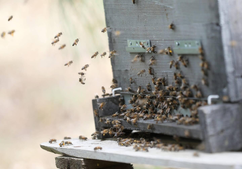 Le rucher agroécologique et de découverte privilégie des pratiques simples et naturelles.