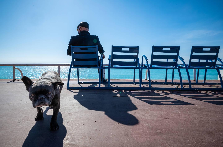 Bouledogue français en goguette sur la Promenade des Anglais