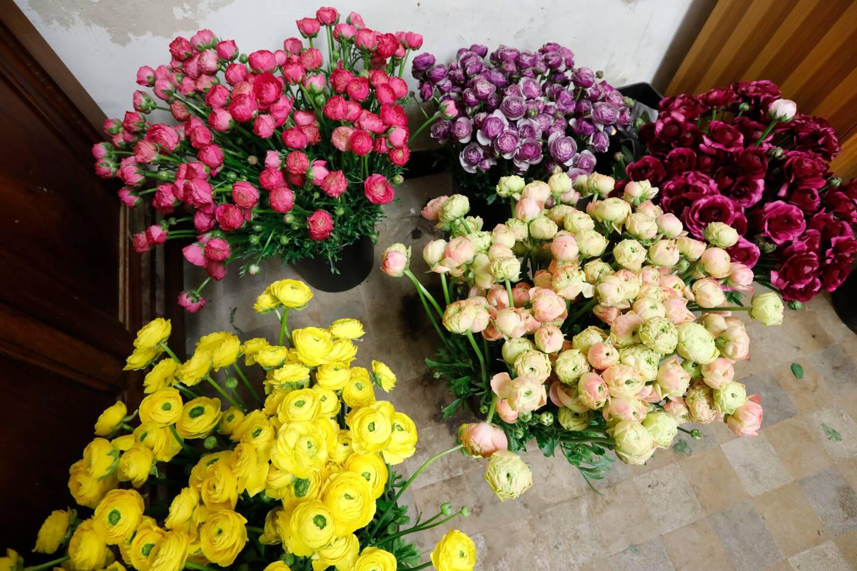 Les horticulteurs varois sont à la relance. C'est la saison des renoncules, très présentes chez les fleuristes et sur les marchés français alors que les premières pivoines sont exportées.