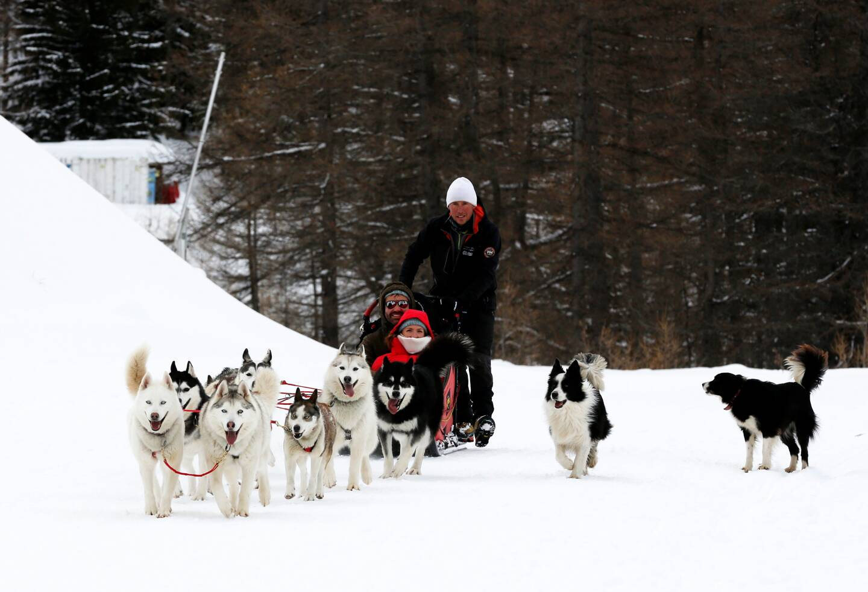 Les stations de ski ont misé sur la diversité pour la saison hivernale avec notamment les chiens de traîneau