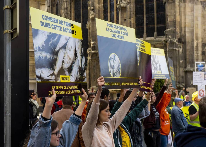 En 2019 déjà, comme ici à Caen, L214 manifestait à l'occasion de la Journée mondiale pour la fin de la pêche. Samedi, à Sanary et dans 38 autres villes de France, des happenings seront organisés pour dénoncer les souffrances des animaux aquatiques pêchés et en élevage.