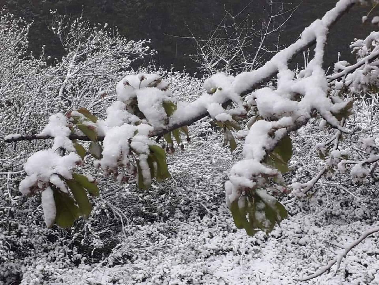 Deux centimètres de neige sur les hauteurs de Breil ce jeudi 7 avril. (Photo C. Frécourt)