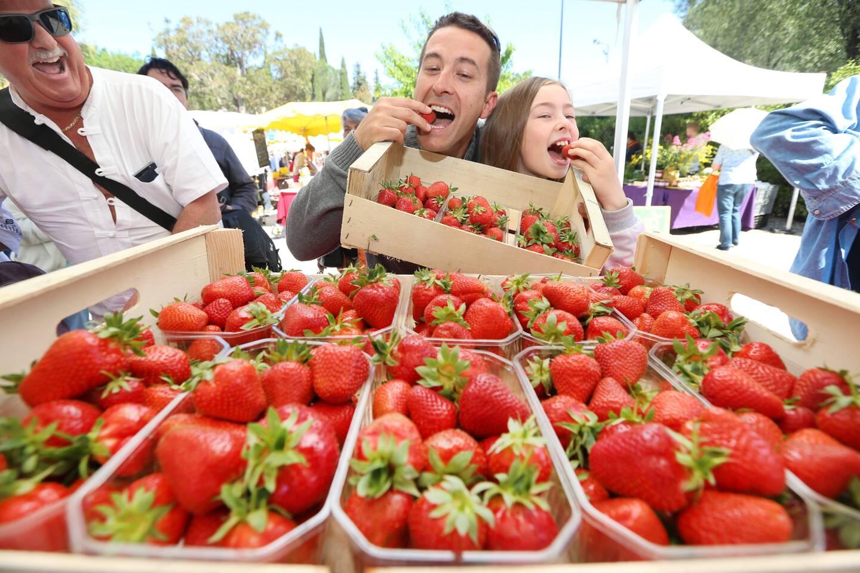 La fête des fraises se tiendra sous une forme différente des années précédentes, ici en 2017.