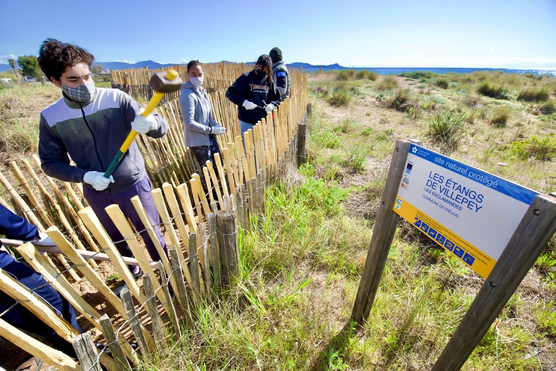 Durant une dizaine de jours, les jeunes Fréjusiens restaurent et préservent les abords des étangs de Villepey et de la plage de Saint-Aygulf en installant notamment des barirères et pièges à sable.