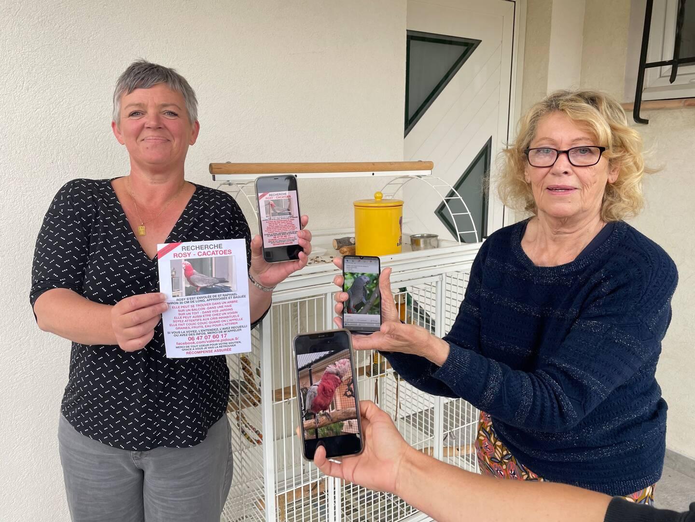 Rosy, Bambi et Rosalie ont disparu il y a un mois. Leurs propriétaires, inconsolables, les recherchent activement.
