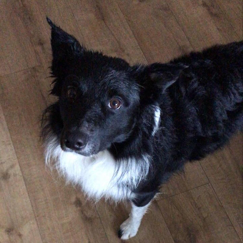 Plusieurs plombs, récemment tirés ou non, ont été retrouvés sur le corps du chien.