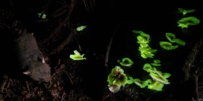 """Enchanted Forest"", de Lincoln MacGregor"