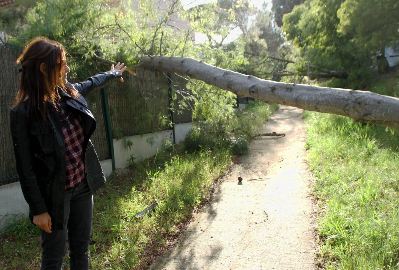 Les Parcs de Longagne, à Gassin, ou toitures et palissades ont subi des dégâts. (Photo J. -M. R)
