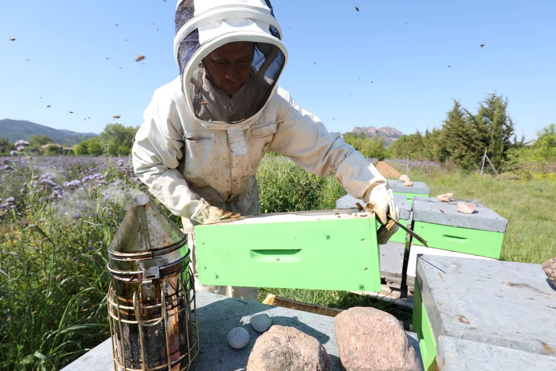 Pour éviter les vols, certains apiculteurs équipent leurs ruchers de traqueurs GPS.