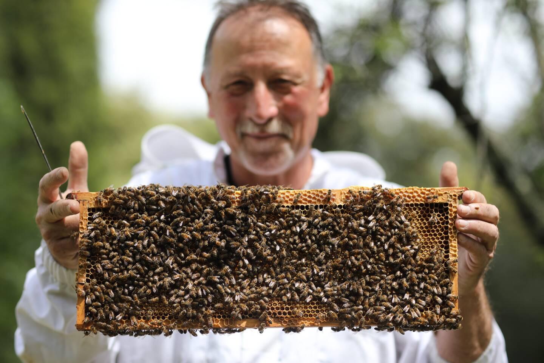 Une des solutions anti vol peut passer par le marquage des plateaux, et de chaque élément de la ruche. (Photo Sébastien Botella)