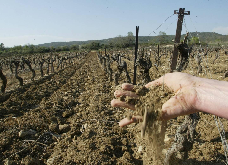 Les périodes de sécheresse ont augmenté sur le territoire avec un fort impact sur la viticulture.